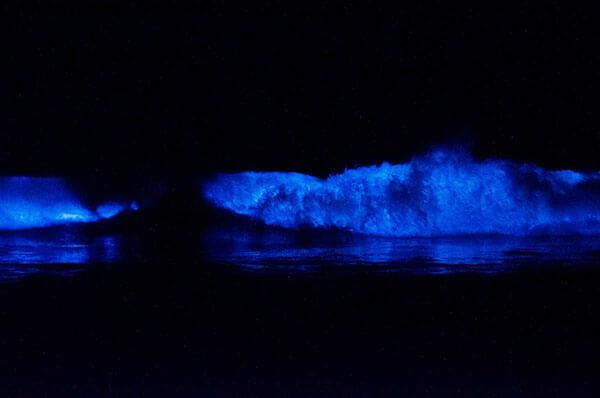 Bioluminescent_Ocean1