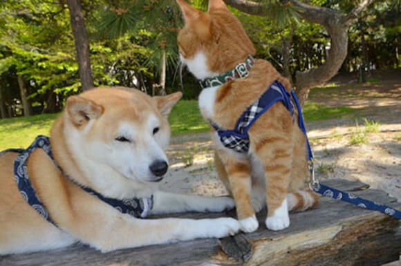 amigos friends cat dog