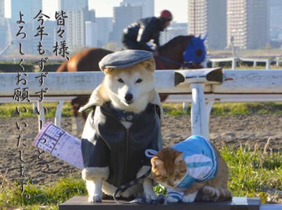 cão gato 5