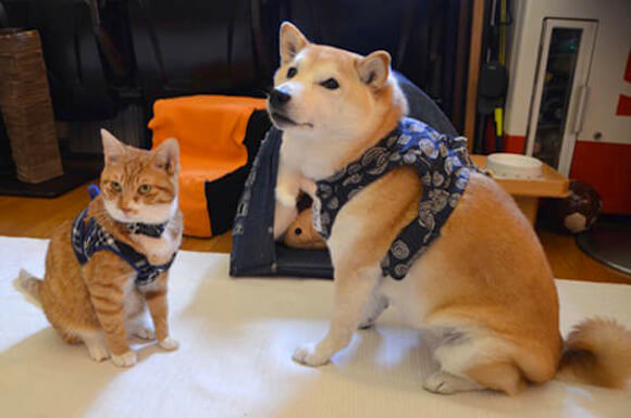 cão gato3