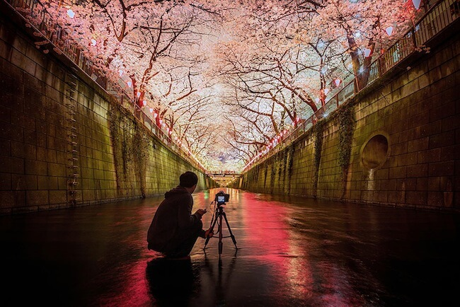 2014-japanese-cherry-blossom-blooming-sakura-22