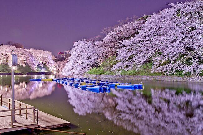 Sakuras da temporada de 2014