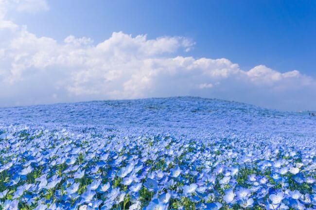Parque japonês coberto por 4,5 milhões de flores