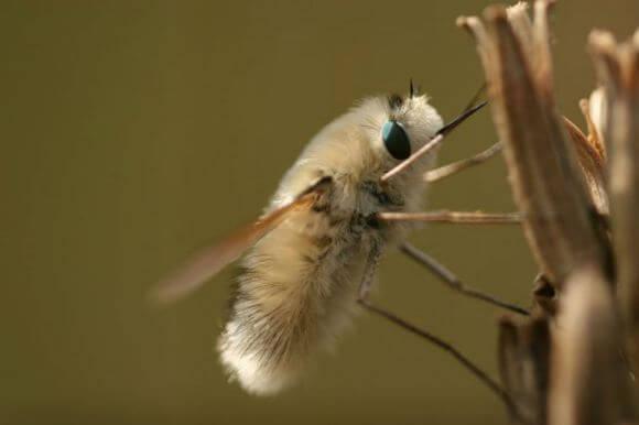 insecto-kawaii-japonshop05