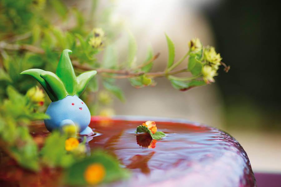 pokemon-photo-jules25-900x600