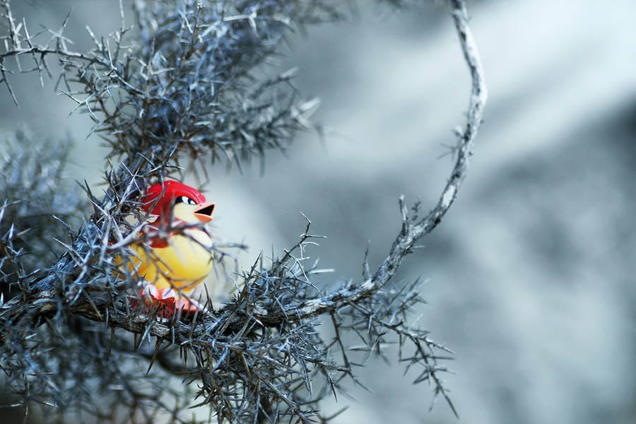 pokemon-photo-jules31-900x600